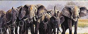 Wildlife Rear Window Graphics RWG1001