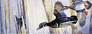 Wood Ducks Woods Rear Window Graphic