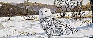 Owl in Snow Rear Window Graphic