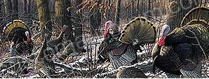 Turkeys in Forest Rear Window Graphic