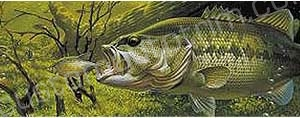Preying Largemouth Bass Rear Window Graphic