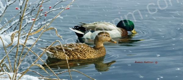 Hautman Winter Waters Ducks Rear Window Graphic