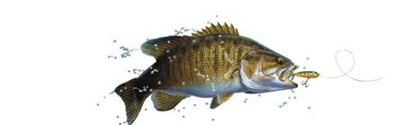 Small Mouth Bass Rear Window Graphic