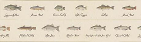 Fish Lineup Rear Window Graphic