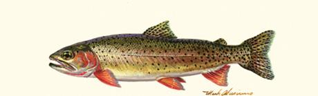 Cutthroat Trout Rear Window Graphic