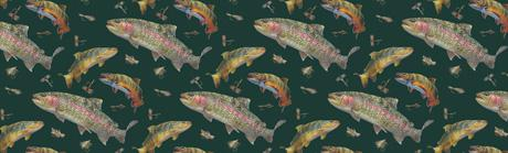 Rainbow Trout Rear Window Graphic