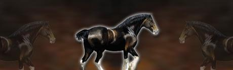 Draft Horses Profile Rear Window Graphic