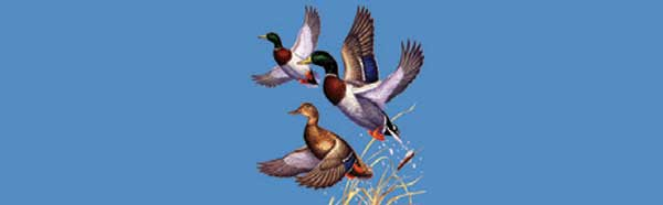 MALLARD DUCKS Rear Window Graphic