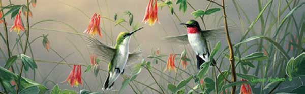 HUMMINGBIRDS Rear Window Graphic
