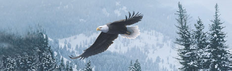 EAGLE IN WINTER FLIGHT Rear Window Graphic
