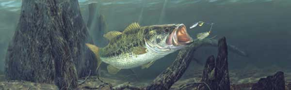 Bass Fishing Rear Window Graphic