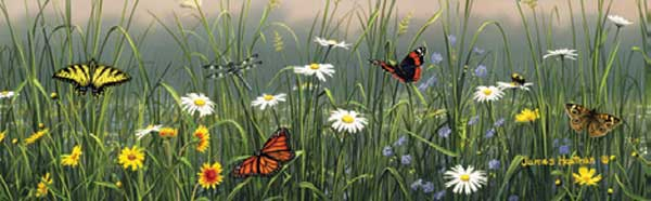 BUTTERFLIES AND FLOWERS Rear Window Graphic