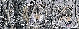 Wolves in Woods Rear Window Graphic