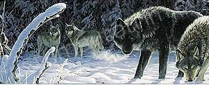Wolves in Snow Rear Window Graphic