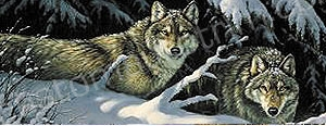 Timber Wolf Rear Window Graphic