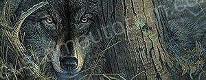Preying Wolf Rear Window Graphic