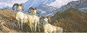 Dall Sheep Rear Window Graphic