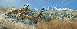 Pronghorn Rear Window Graphic
