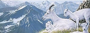 Mountaintop Dall Sheep Rear Window Graphic