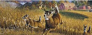 Deer Rear Window Graphics RWG975