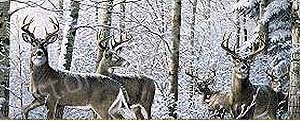 Deer Rear Window Graphics RWG981