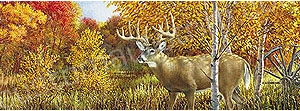 Deer Rear Window Graphics RWG983