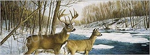 Deer Rear Window Graphics RWG984