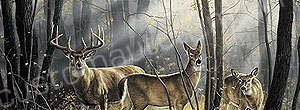 Deer Rear Window Graphics RWG985